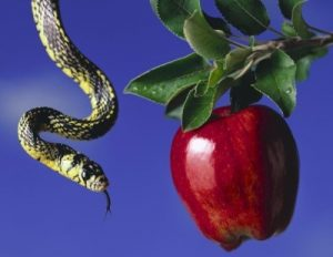 Serpent hanging from top of image, looking at a ripe red apple