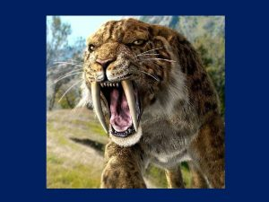 Sabertoothed tiger looking towards the left side of the camera and roaring ferociusly. Health in the Time of Coronavirus