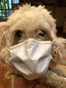 Katzes' dog Barli donns a white Covid facemask.