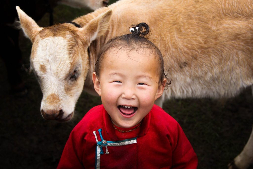 Little girl laughs in front of calf