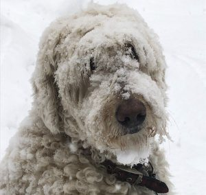 Katzes dog Barli in the snow