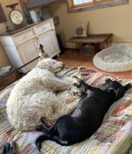 2 Katz dogs lie together on a rug