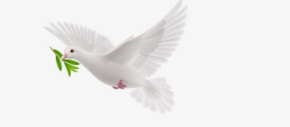 A dove with a sprig in its mouth flies against a pure white background