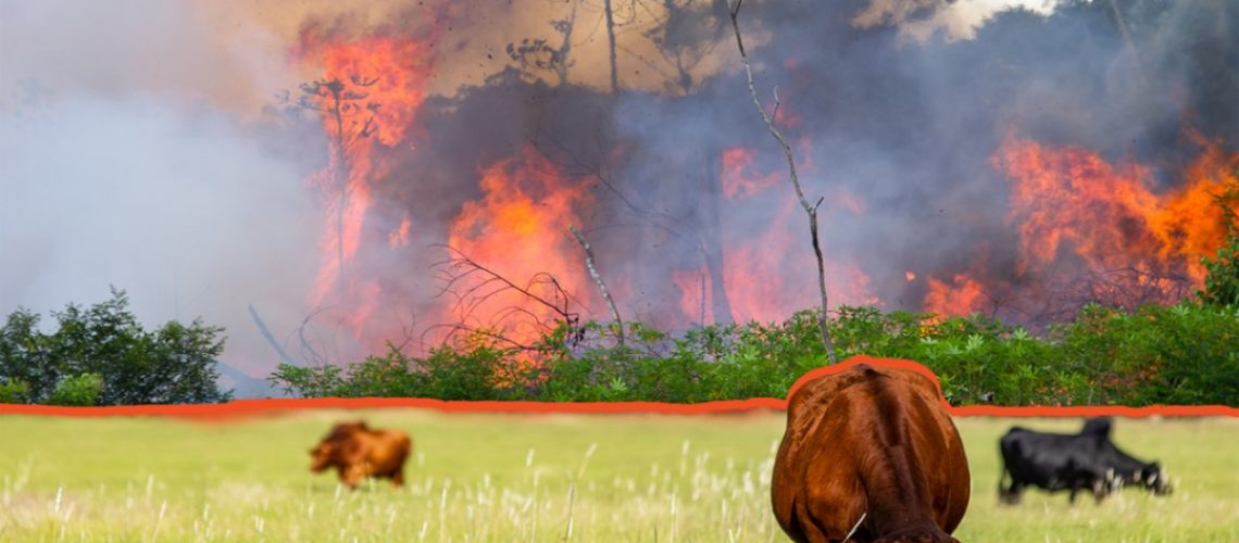 Painting of a field with a cow grazing and a raging fire in the background.